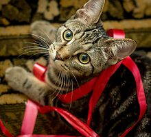 Did You Need This Ribbon? by Mikell Herrick