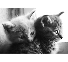 Orphan cats 2 Photographic Print