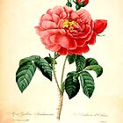 Vintage botanical art, red rose flower. by naturematters