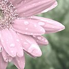 So Many Raindrops by AngieDavies