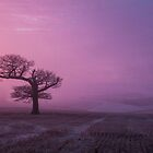 Lone tree at sunrise in mist by herbpayne