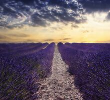 lavender sunset by lucyliu