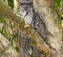 All Squashed Up by stevealder