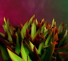 Succulents in red by Jessica Valner
