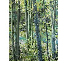 Trees of Riverbanks Photographic Print