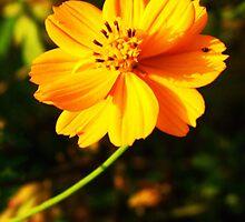 Beautiful yellow flower by vitulagarwal