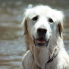 Warrandyte River White Retriever by Elizarose