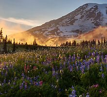 Mount Rainier Fog Sunset Flowers by mikereid