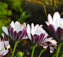 Purple and White Flowers by Clare Clarke