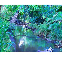 """""""Manoa Valley Creek"""" by Carter L. Shepard Photographic Print"""