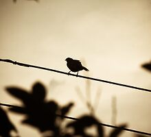 Bird on a cable at sunset by Mudith Jayasekara