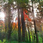 Rainbow Forest by Dan Jesperson