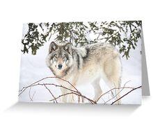 Dream Wolf.... Greeting Card