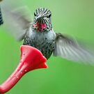 Hummingbird Houdini by Ken Haley