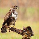 the Queen of birds by chiaraSibona