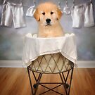 Goldie in the basket by Lover1969