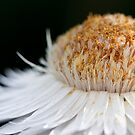 Sunny Flower by Susan Tong