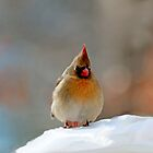 Cardinal in the Snow by Eileen McVey