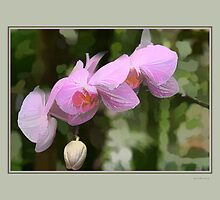 Orchids by Tom Prendergast