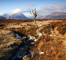 The Solitary Tree, Rannoch Moor Scotland by Martin Lawrence