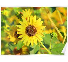 """Sunflower"" by Carter L. Shepard Poster"