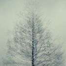Tree at Dovestones. by maxblack