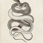 Vintage Snake Illustration by PatiDesigns