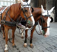Vienna Austria, St.Stephens Cathedral, Horses by GregorDyer