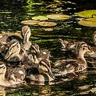 Ducklings  by LudaNayvelt