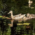 Ducklings family by LudaNayvelt