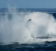 Humpback Whale Breaching 5 by Gotcha29