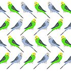 Budgies A Lot by Nik Jones