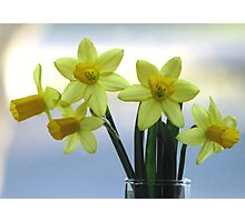 Whisper of Spring on the Windowsill Photographic Print