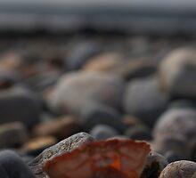 Empty Shell by jones318