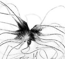 Alien by Anne Gilbert