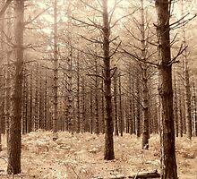 Forest 6 by Furiarossa