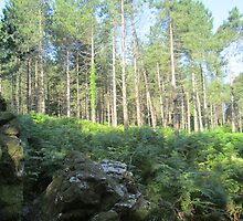 Forest 7 by Furiarossa