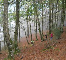 Forest 10 by Furiarossa