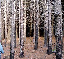 Forest 12 by Furiarossa