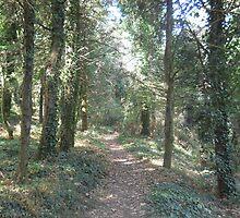 Forest 14 by Furiarossa