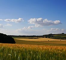 Wiltshire Summer Fields by dylcojones