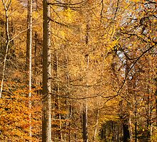 Autumn colours, riverside walk, November 2103  by Hugh McKean