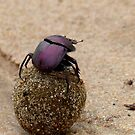 Milky Way Navigation - Dung Beetle - SA by AndreaEL