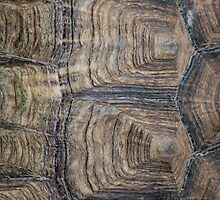Tortoise Shell by JinzhaBloodrose