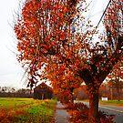 I Miss the Fall by DearMsWildOne