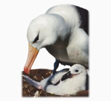 Black-browed Albatross, Falkland Islands by Geoffrey Higges