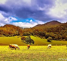 Cloudy Day in the Orara Valley by wallarooimages