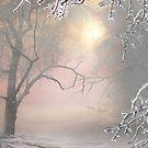 Ice Land by Igor Zenin