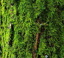 Mossy by JinzhaBloodrose