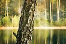 Tree on the lake by Caterpillar